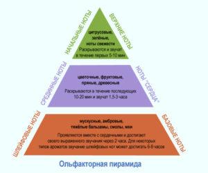 parfum piramidasi